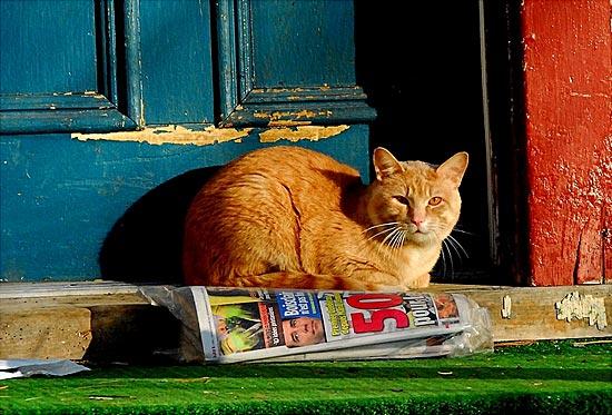 Мэром города Шарон в Висконсине, США, является кот Фредди