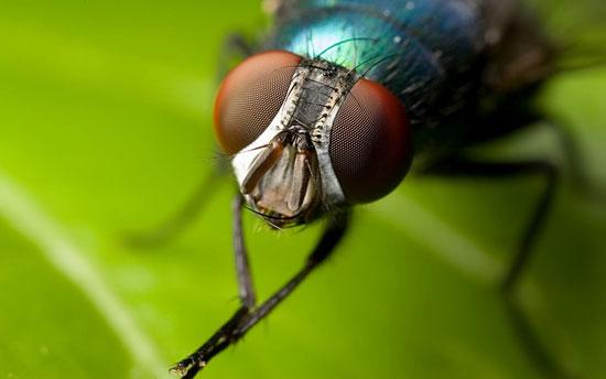 После наступления половой зрелости у мух-подёнок есть всего три часа на спаривание