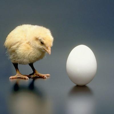 Куриные яйца не нуждаются в хранении в холодильнике