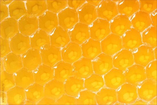 Медовый человек — это труп человека, засахаренный в мёде, который использовали как лекарство