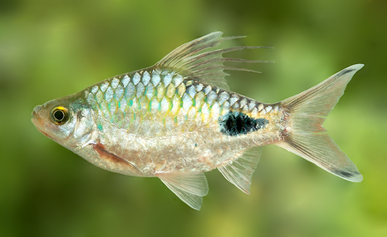 10 видов животных, названных в честь знаменитостей