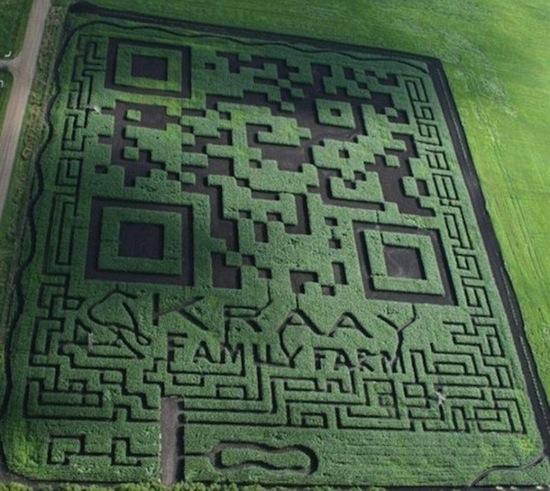 Канадские фермеры выстригли на кукурузном поле самый большой в мире QR-код