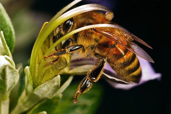 Пчёлы разбираются в искусстве