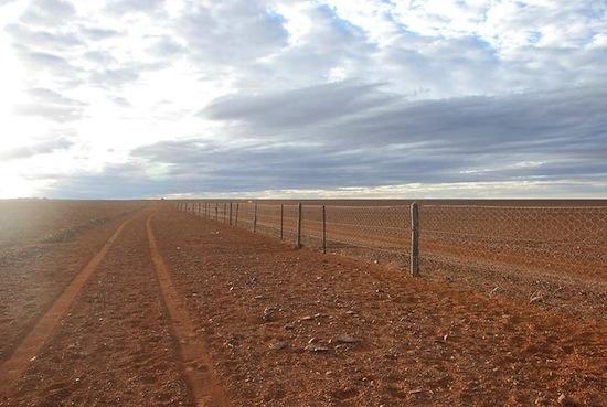 В Австралии есть самый длинный в мире забор