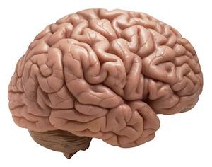 Мозг может «редактировать» полученный опыт с помощью подсознания