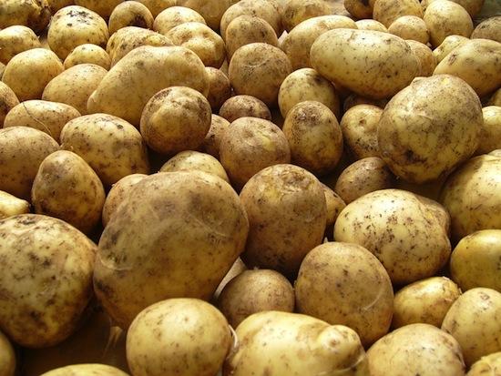 Картофель — идеальное растение для астронавтов