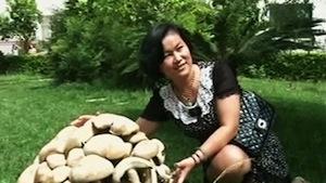 В «Царстве грибов» нашли Мать грибов — гиганта весом 15 кг