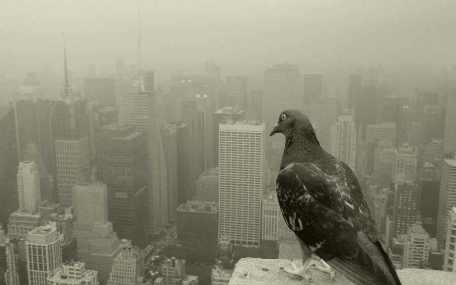 Городские птицы щебечут рэп