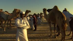 В ОАЭ ежегодно проводится конкурс красоты среди верблюдов • Фактрум