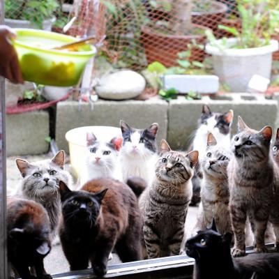В Японии есть Остров кошек, где живут всего 100 человек и несколько сотен бродячих и диких кошек