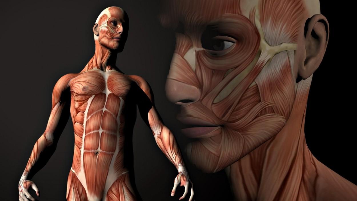 10 самых заметных «шрамов», оставленных на теле человека эволюцией