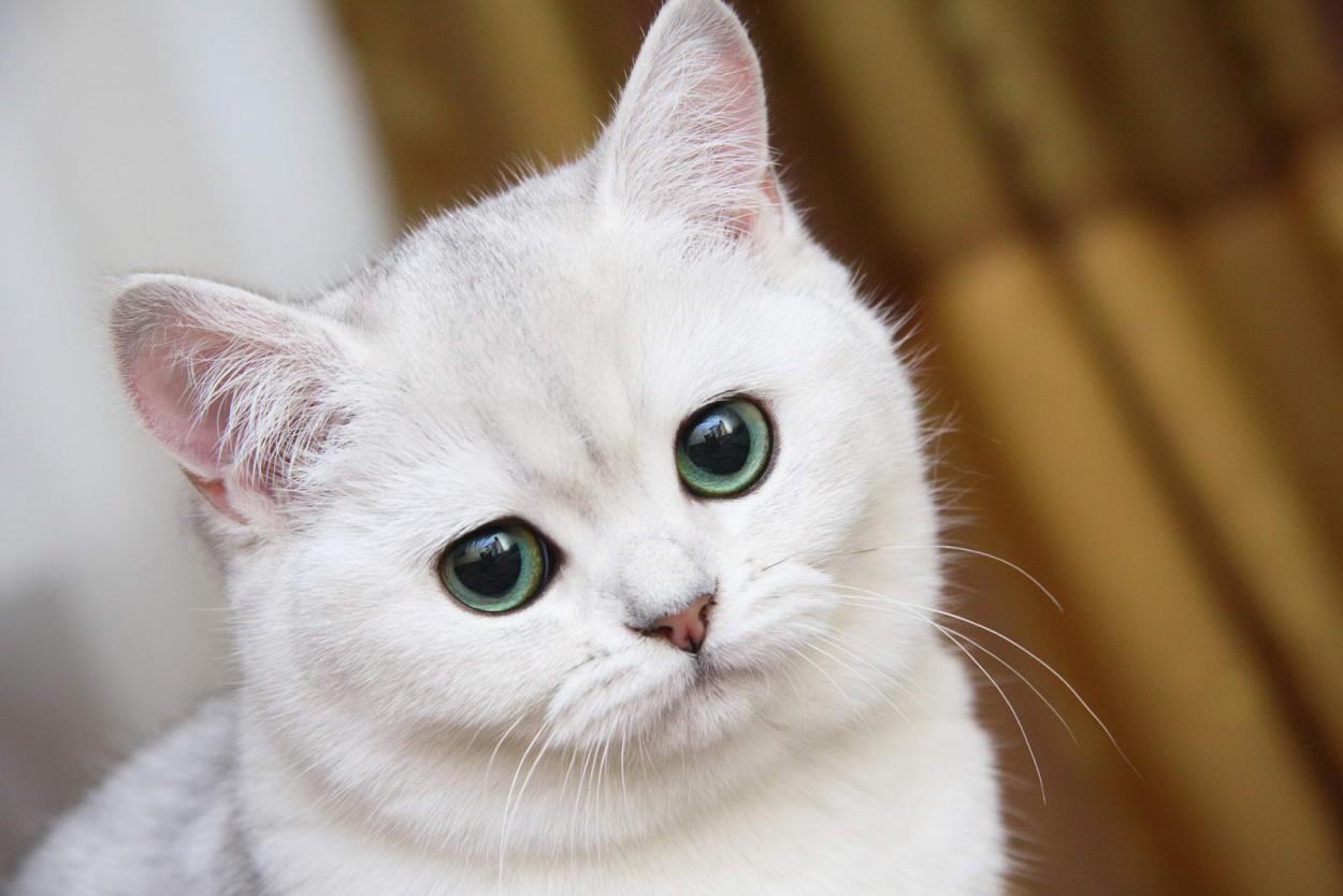 У кошек и собак есть шестое чувство – ультрафиолетовое зрение