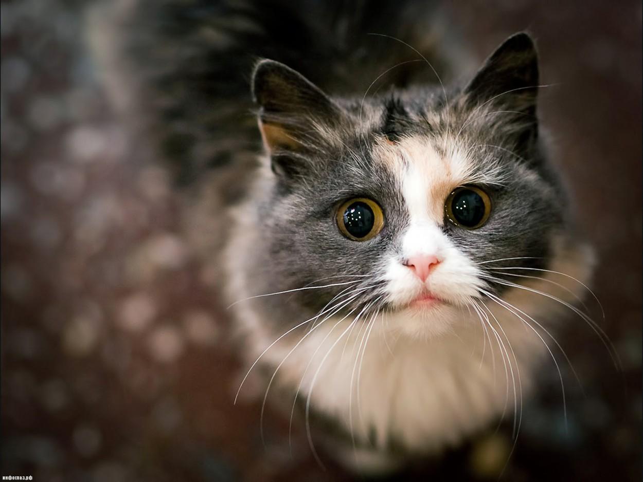 Пока люди специально одомашнивали собак, кошки одомашнили себя самостоятельно
