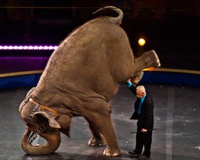 Слоны в США страдают ожирением