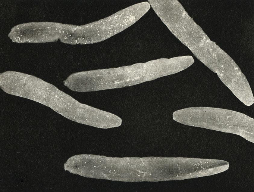 Обученным червям отрубили головы, но они всё равно помнили, чему научились
