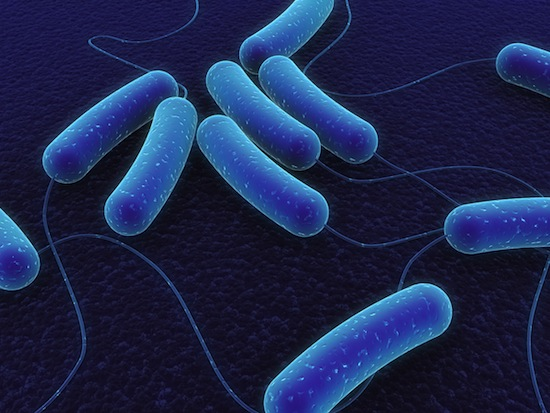 the extent to which microbes interfere The gut microbiome refers to the trillions of bacteria, viruses and fungi that live in your gut here's why your gut microbiome is so important for health.