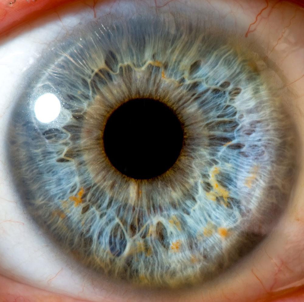 глаз скачать программу - фото 11