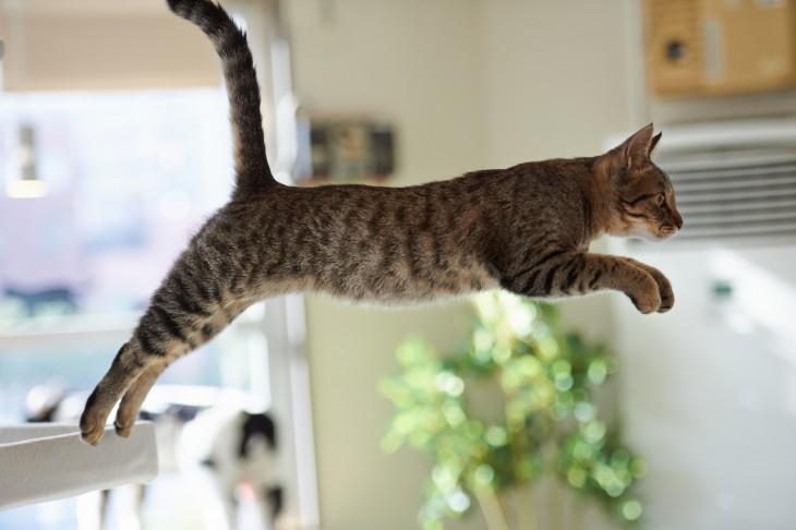 10 глупых мифов о кошках, в которые верят практически все