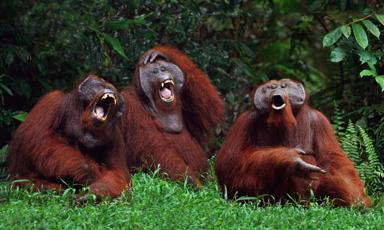 Прикольные картинки смеющихся людей и животных