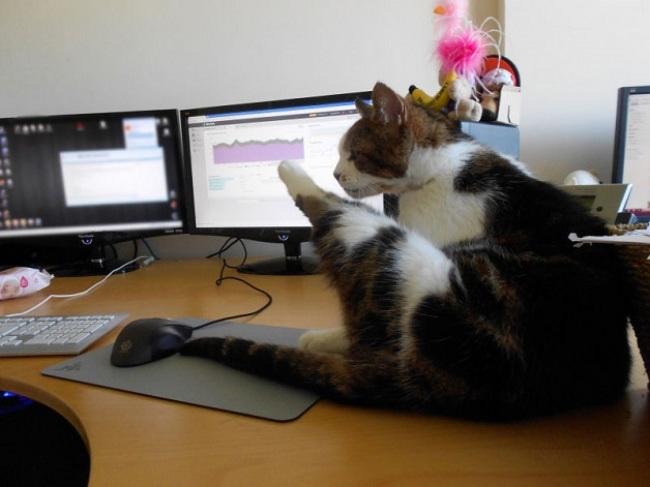 девушка фото с котом про работу можно носить офис