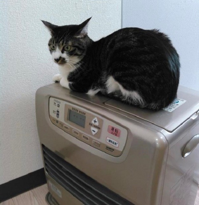 создает естественные, картинки кошек как они работают наших