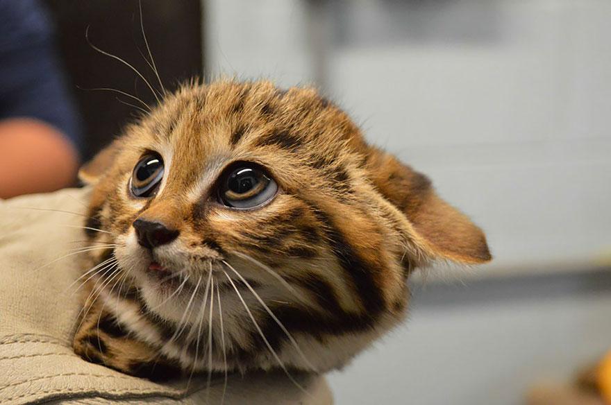 17великолепных котов, окоторых никто неслышал