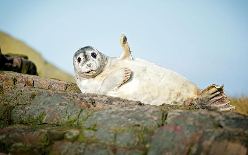 Прикольные картинки с тюленями, открытка