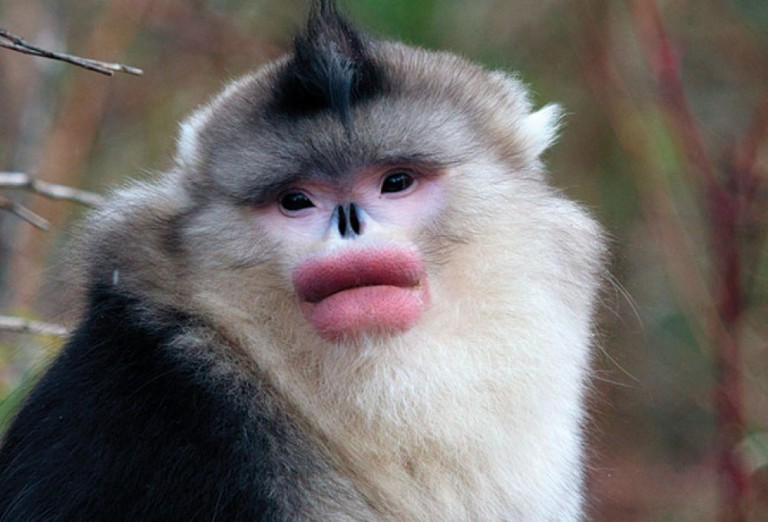 обезьяна губами картинка с