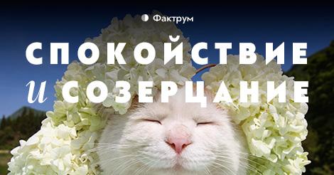 Широ Неко — кот, постигший дзен