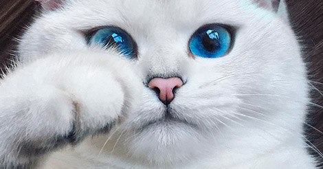 У этой кошки самые прекрасные глаза, что мы видели!