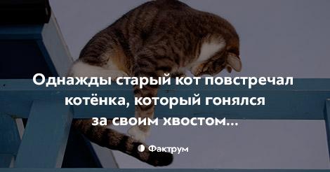 Однажды старый кот повстречал котёнка, который гонялся за своим хвостом…
