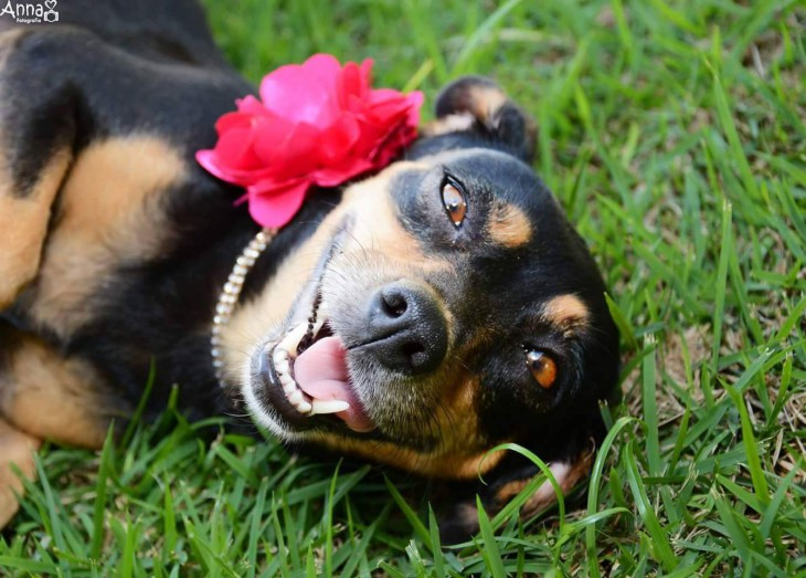 Эта собака затмила все ваши «беременные фотосессии»!