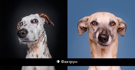 Фотопроект: 10 собак, сомневающихся в адекватности фотографа