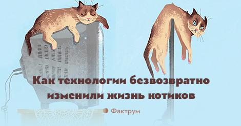 Как технологии безвозвратно изменили жизнь котиков