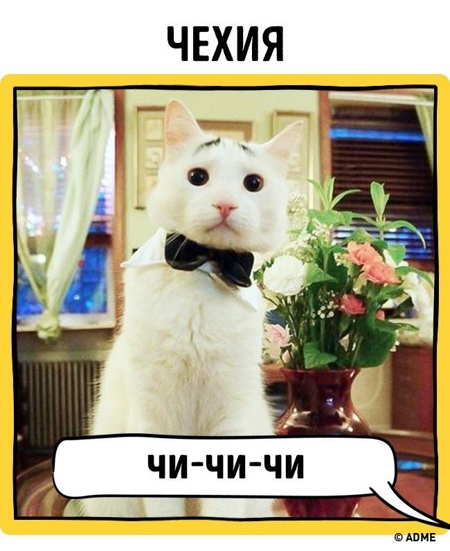 Вот как вразных странах подзывают кошек!