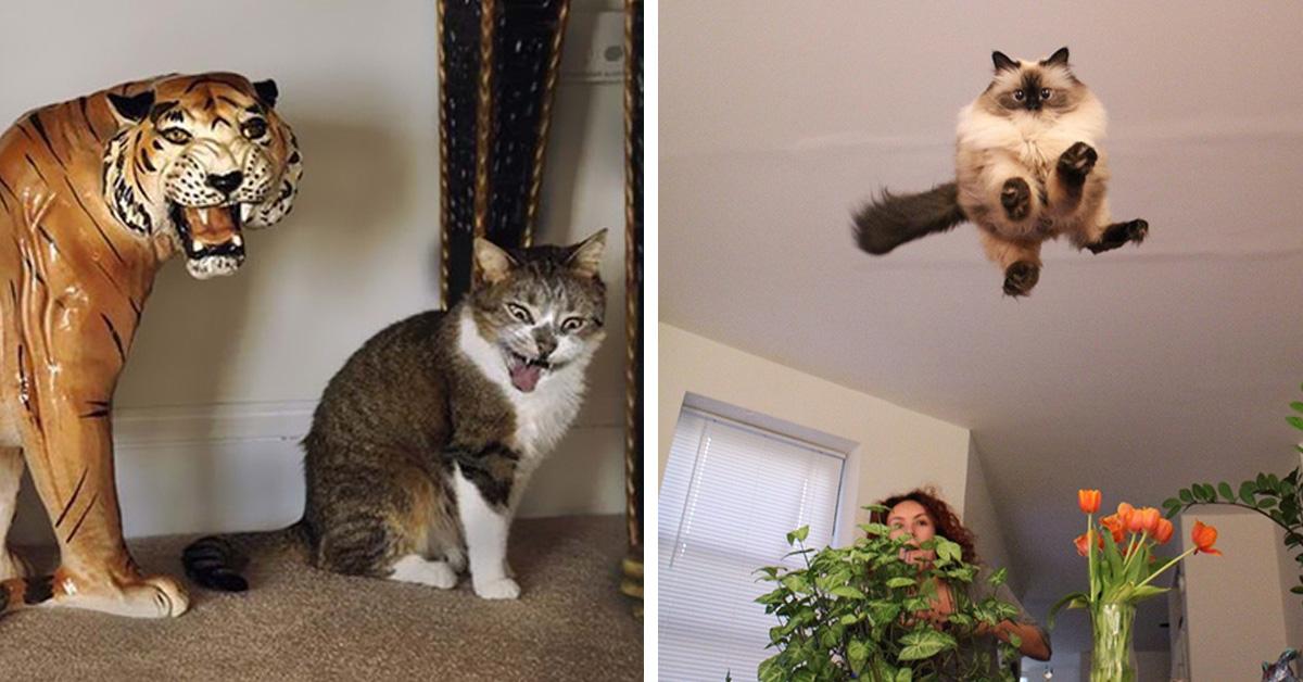 20 клёвых котиков, которых сфотографировали в ТОТ САМЫЙ момент!