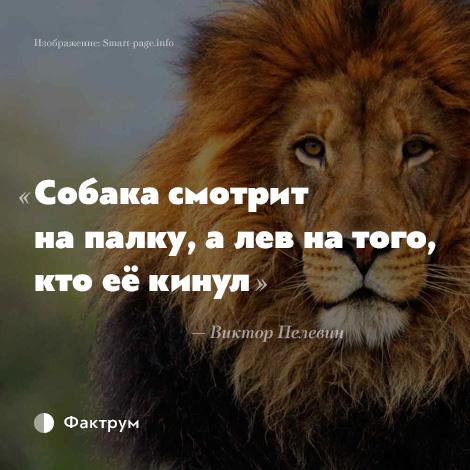 львы и афоризмы фото очень быстро