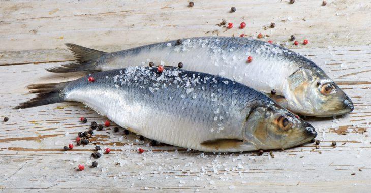 Two herrings