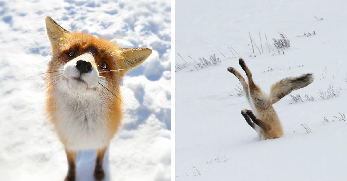 20 симпатичных лисичек, которые радуются приходу зимы