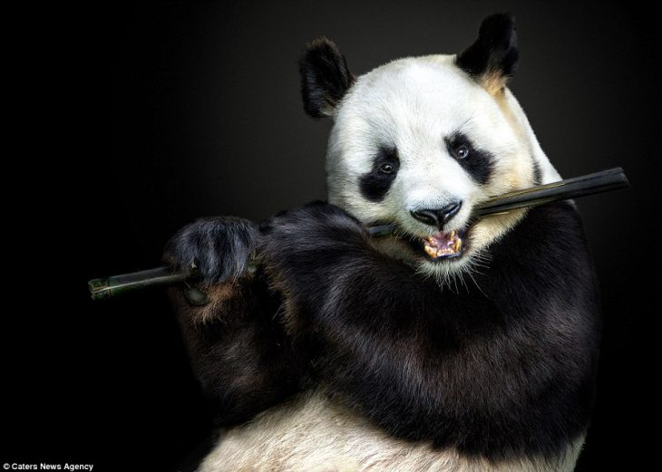 Идеальные кадры: вы не поверите, что эти портреты животных сделаны не в студии