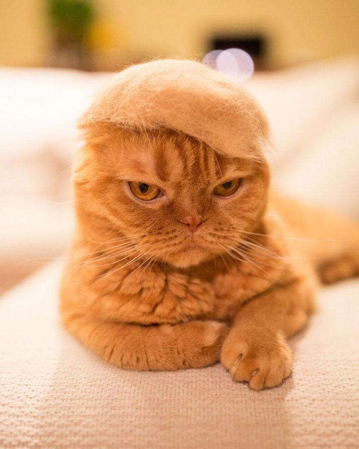 Если увас есть кот ивыустали убирать его шерсть, тоберите пример сэтой находчивой девушки.