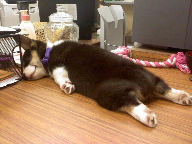 30 собак, которых ВНЕЗАПНО сморил сон