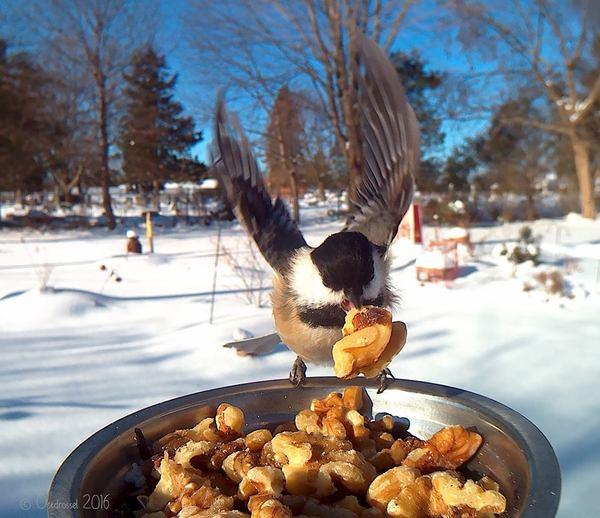 Игра эмоций: фотограф сделал кормушку и всю зиму фотографировал птиц