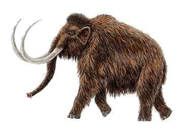 12 интересных фактов о мамонтах