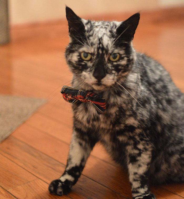 Мраморный кот: необычная окраска сделала Скрэппи звездой интернета