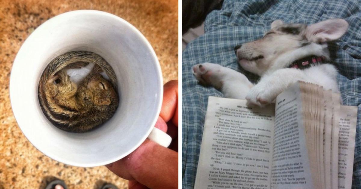 Отрубился: 15 самых смешных поз, в которых спят домашние животные