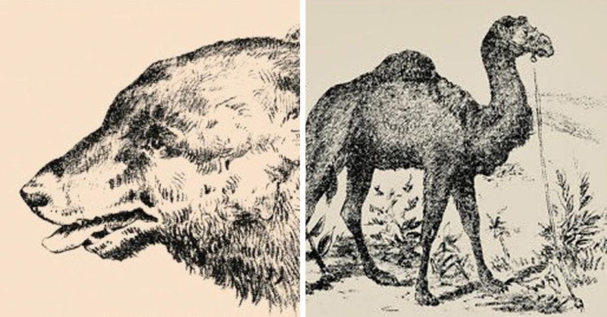 Получится ли у вас отыскать лицо в этой загадке из журнала 1880 года?