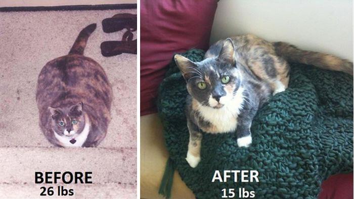 Кот 12 Лет Сильно Похудел. Почему старый кот сильно похудел