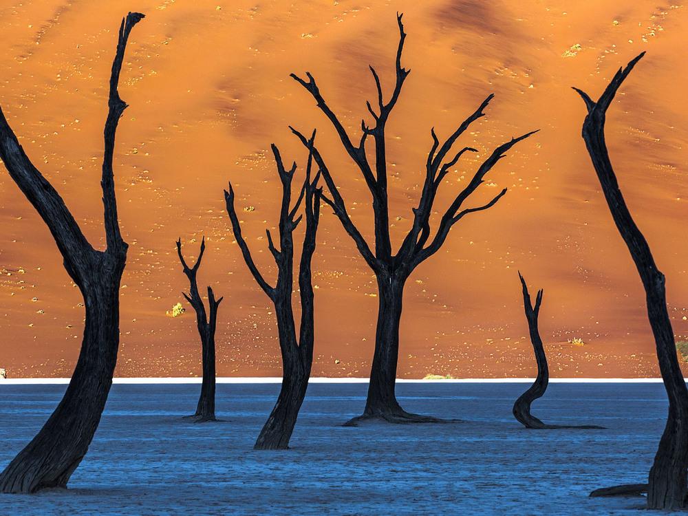 Лучшие работы фотографов природы, победившие на конкурсе «Siena International Photo Awards»