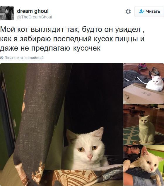 «Мои отношения с кошкой»: шедевральные записи владельцев котиков в соцсетях